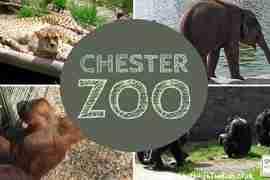 Chester Zoo Walk